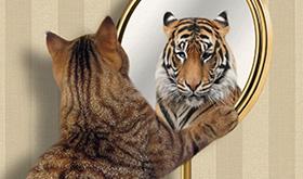 Nosso cérebro nos faz pensar que somos mais espertos do que realmente somos