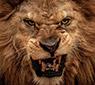 Dando Check Com Uma Ficha - Carne vermelha para um leão faminto/CardPlayer.com.br
